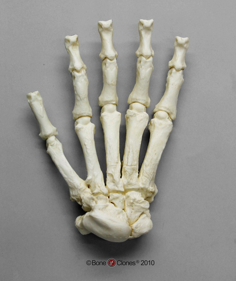 bones%202.jpg